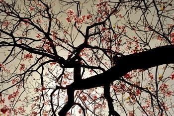 Der Hausbaum auf dem Grundstück