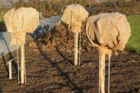 Frostschutz für Pflanzen im Winter